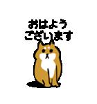 大人可愛い!柴犬のゆる敬語・丁寧語(個別スタンプ:1)