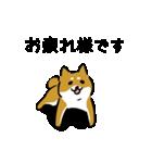 大人可愛い!柴犬のゆる敬語・丁寧語(個別スタンプ:5)
