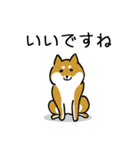 大人可愛い!柴犬のゆる敬語・丁寧語(個別スタンプ:7)