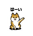 大人可愛い!柴犬のゆる敬語・丁寧語(個別スタンプ:8)