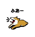 大人可愛い!柴犬のゆる敬語・丁寧語(個別スタンプ:17)