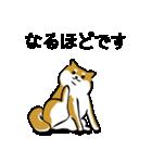 大人可愛い!柴犬のゆる敬語・丁寧語(個別スタンプ:24)