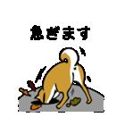 大人可愛い!柴犬のゆる敬語・丁寧語(個別スタンプ:30)