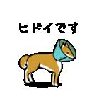 大人可愛い!柴犬のゆる敬語・丁寧語(個別スタンプ:38)
