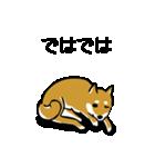 大人可愛い!柴犬のゆる敬語・丁寧語(個別スタンプ:40)