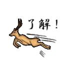 愉快な野性動物たち(個別スタンプ:05)