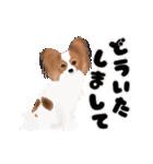 動く!パピヨン(個別スタンプ:11)