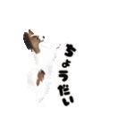動く!パピヨン(個別スタンプ:17)