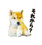 今日も柴犬といっしょ(個別スタンプ:17)