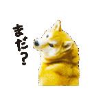 今日も柴犬といっしょ(個別スタンプ:18)