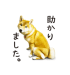 今日も柴犬といっしょ(個別スタンプ:19)