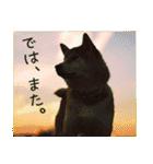 今日も柴犬といっしょ(個別スタンプ:22)