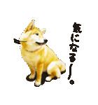 今日も柴犬といっしょ(個別スタンプ:27)