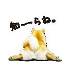 今日も柴犬といっしょ(個別スタンプ:28)