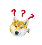 今日も柴犬といっしょ(個別スタンプ:31)