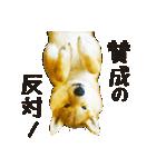 今日も柴犬といっしょ(個別スタンプ:34)