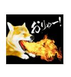 今日も柴犬といっしょ(個別スタンプ:38)
