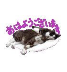 猛暑に負けにゃい!夏を乗り切るはちわれ猫(個別スタンプ:01)