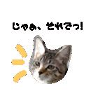 ツンデレこはくちゃん(個別スタンプ:02)
