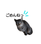 ツンデレこはくちゃん(個別スタンプ:04)