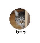 ツンデレこはくちゃん(個別スタンプ:16)