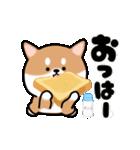 まる柴っち!(個別スタンプ:1)