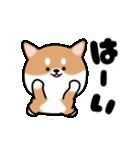まる柴っち!(個別スタンプ:3)