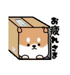 まる柴っち!(個別スタンプ:9)