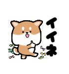 まる柴っち!(個別スタンプ:13)