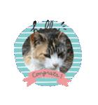 毎日猫舎(個別スタンプ:2)
