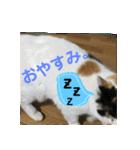 毎日猫舎(個別スタンプ:3)