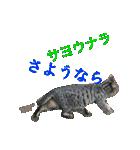 毎日猫舎(個別スタンプ:4)