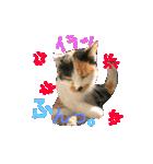 毎日猫舎(個別スタンプ:5)