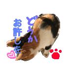 毎日猫舎(個別スタンプ:6)