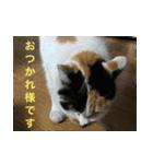 毎日猫舎(個別スタンプ:9)