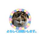 毎日猫舎(個別スタンプ:10)