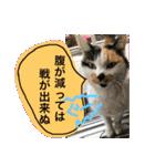 毎日猫舎(個別スタンプ:11)