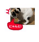毎日猫舎(個別スタンプ:12)