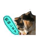 毎日猫舎(個別スタンプ:13)