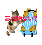 毎日猫舎(個別スタンプ:14)