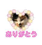 毎日猫舎(個別スタンプ:15)