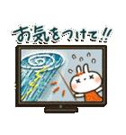 夏~秋「白うさぎさん」日常パック(個別スタンプ:4)
