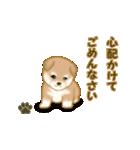 よちよち秋田犬2(心遣い)(個別スタンプ:11)
