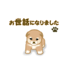 よちよち秋田犬2(心遣い)(個別スタンプ:22)