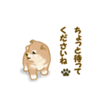 よちよち秋田犬2(心遣い)(個別スタンプ:25)