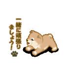 よちよち秋田犬2(心遣い)(個別スタンプ:32)