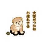 よちよち秋田犬2(心遣い)(個別スタンプ:33)