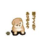 よちよち秋田犬2(心遣い)(個別スタンプ:37)