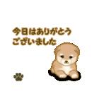 よちよち秋田犬2(心遣い)(個別スタンプ:38)