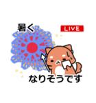 しば犬大福1(個別スタンプ:02)